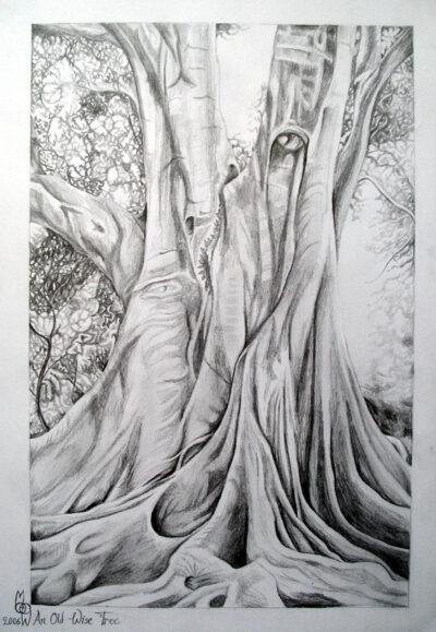 """An Old Wise Tree"" - 2006 - Pencil on paper - Sold"