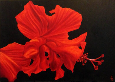 """""""Red Hibiscus"""" - Oil on canvas - 50x70cm - For Sale - £150"""