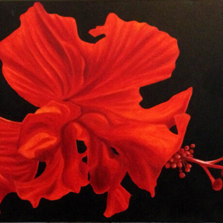"""Red Hibiscus"" - Oil on canvas - 50x70cm - For Sale - £150"
